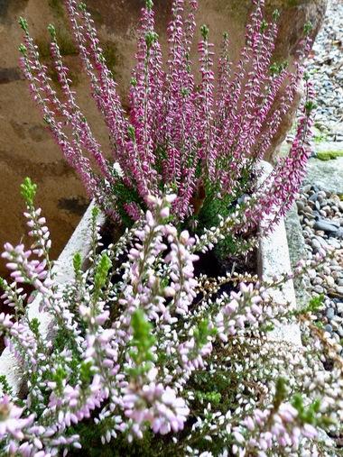 Jardinières d'hiver :