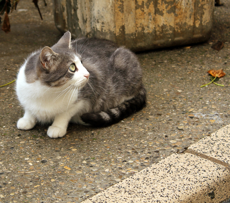 Chats ensoleillés