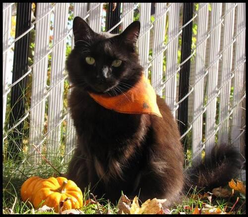 Chats d 'automne