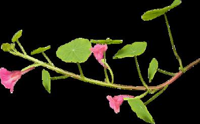 Tubes fleurs en png