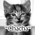 Concours de *Chacha*