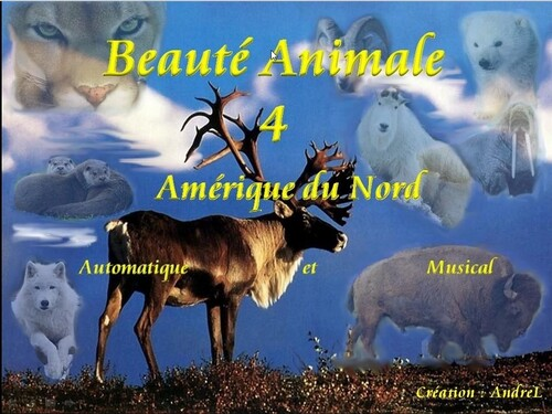 Beauté Animale 4 (Andrel)