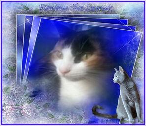 Bienvenue chez lovercats