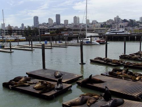 Otaries sur le Pier 39 à SAN FRANCISCO
