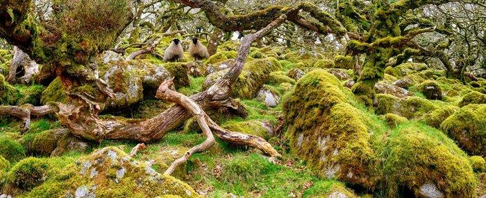 Wistman's Wood : la forêt secrète hors du temps du Royaume-Uni ! avatar Par Samuel Barone