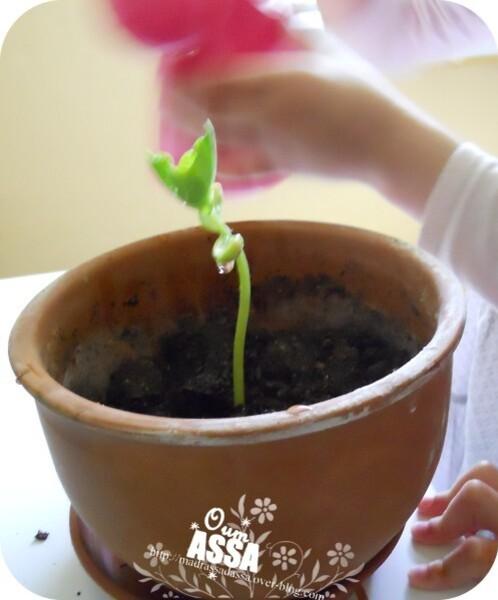 plante1306.jpg