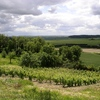 Les vignes vers Nogent sur Seine