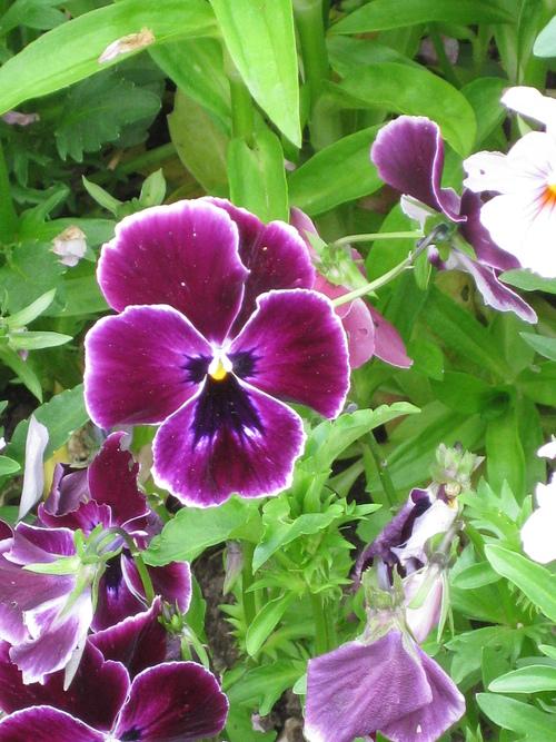 Les fleurs et roses gérées par Jean Pierre