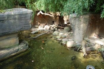 dierenpark emmen d50 099