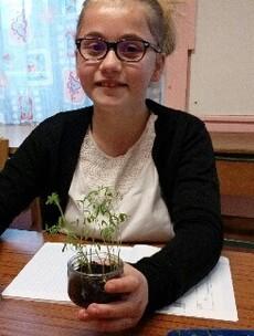 Plantations expérimentales