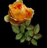 """""""Rose d'automne"""" ..."""