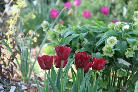 Avril sous le soleil de Mai