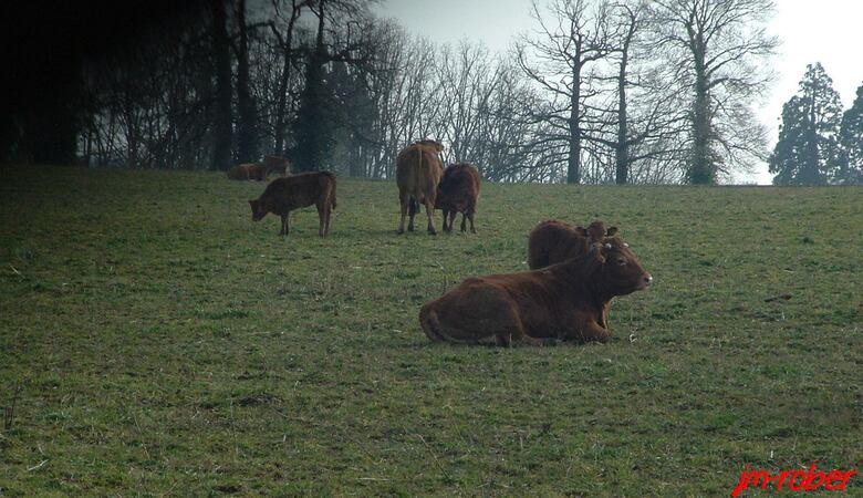 Juste une promenade de campagne, oh! les vaches