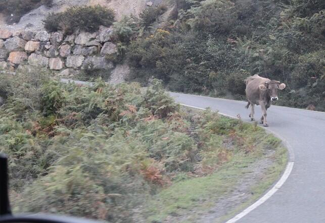 5 Sur la route du lac de Covadonga (23)