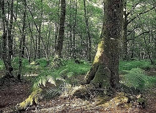 Forêt de Paimpont- Brocéliande