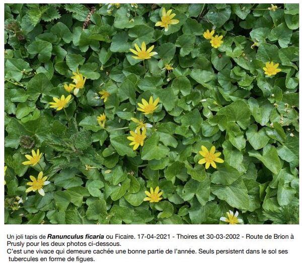Les fleurs printanières...