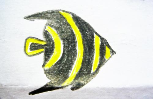 Les poissons de Caraibes