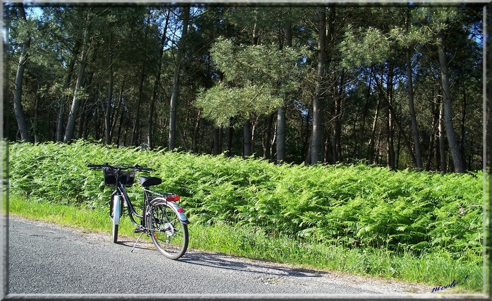 Mon vélo en juin 2012...