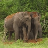 animal_elephant_couple_love
