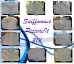 PictureIt 213 - Sniffmouse