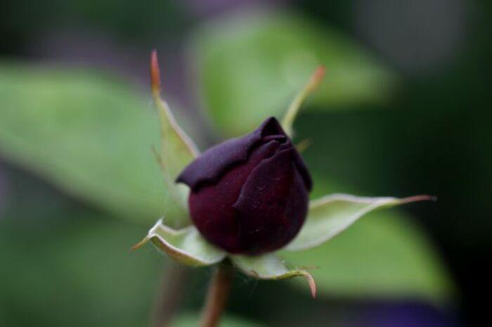 Les introuvables ou presque : Black Prince