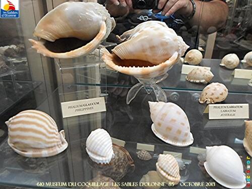 MUSEUM DU COQUILLAGE  3/16   vacances 10/ 2013 SABLES D'OLONNE    16/12/2013