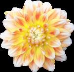 Des fleures pour  vous amuser