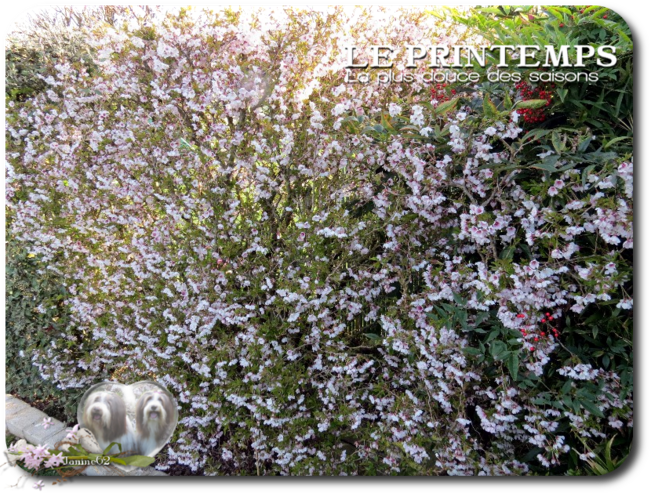 ♥ le jardin d' Athos & Cheyenne♥ photos mi-mars 2017