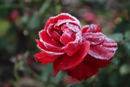 1ères gelées matinales et 1er pas vers l'hiver