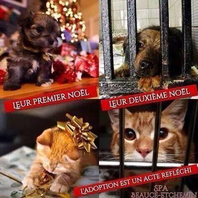 Un chat ou un chien n'est pas un jouet pour Noël