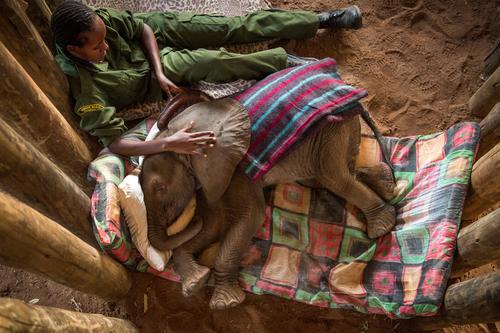 Les éléphants donnent du pouvoir aux femmes