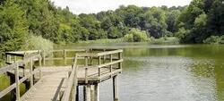 Les étangs bruxellois malades de l'algue bleue