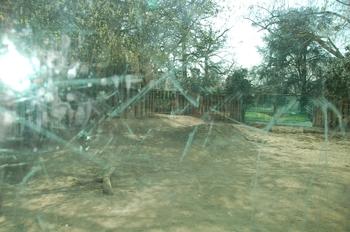 zoo cologne d50 2012 190