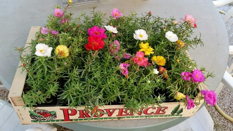 MARSEILLE - Cricri fait son petit jardinet et mamikéké essaie de le suivre ... !