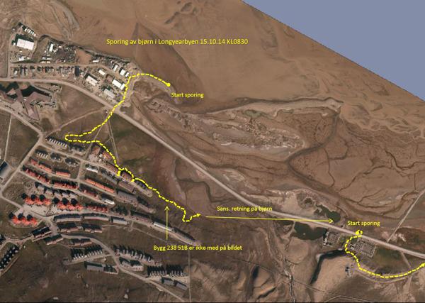Kart, isbjørnens bevegelser i Longyearbyen.