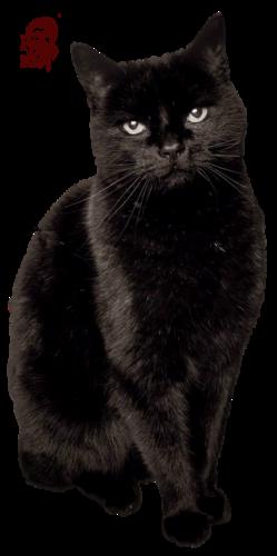 Tube chat noir