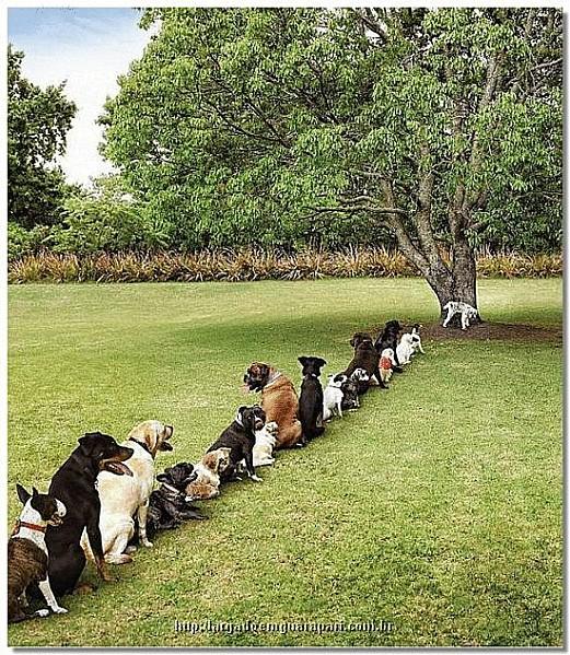 deforestation.gif