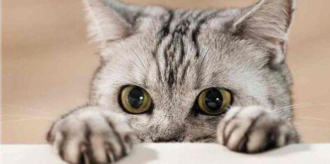 """Résultat de recherche d'images pour """"Prière d'un chat et d'un enfant"""""""