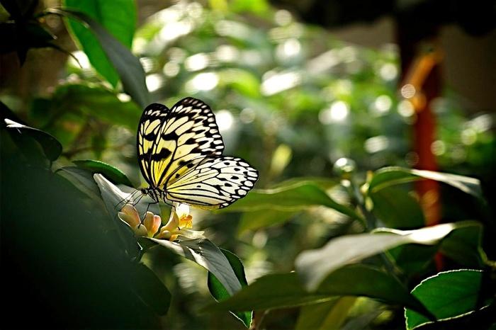 Les Plantes Étranges De Mme Z  - Mystère Au Jardin Botanique