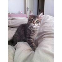 Chats retrouvés