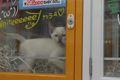 17 - Des chats à la fenêtre, encore