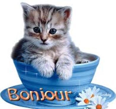 Journée chats    1