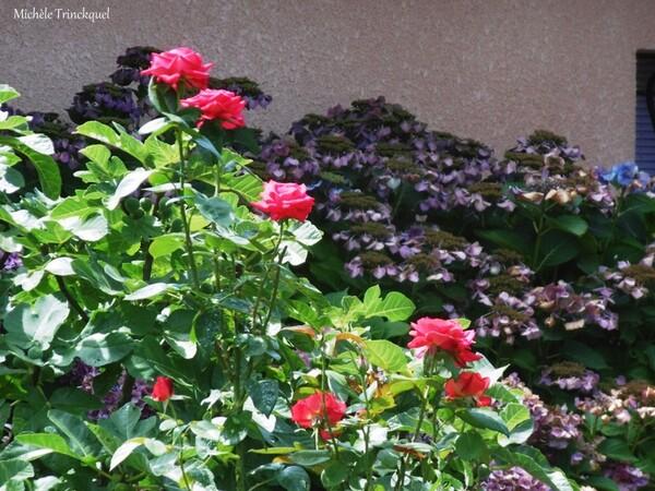 Une balade fleurie dans mon village le 31 juillet (suite)...