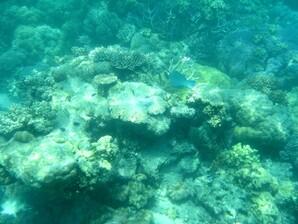 Plongee-Mickaelmas-Cay-0--21-.jpg