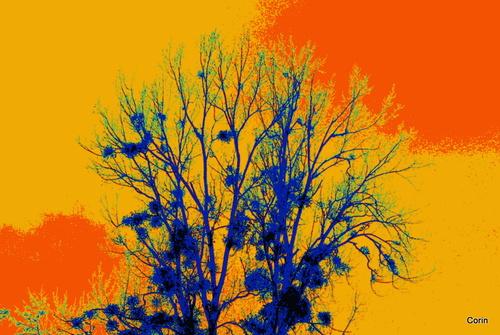 L'arbre et le gui