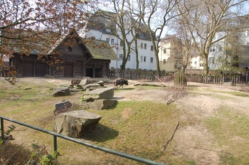 zoo cologne d50 2012 180