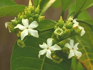 Une plante régénératrice ? ...