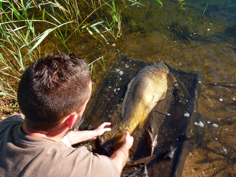 Le pêcheur de carpes