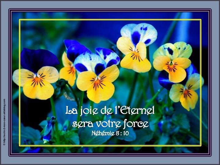 La joie de l'Eternel sera votre force - Néhémie 8 : 10