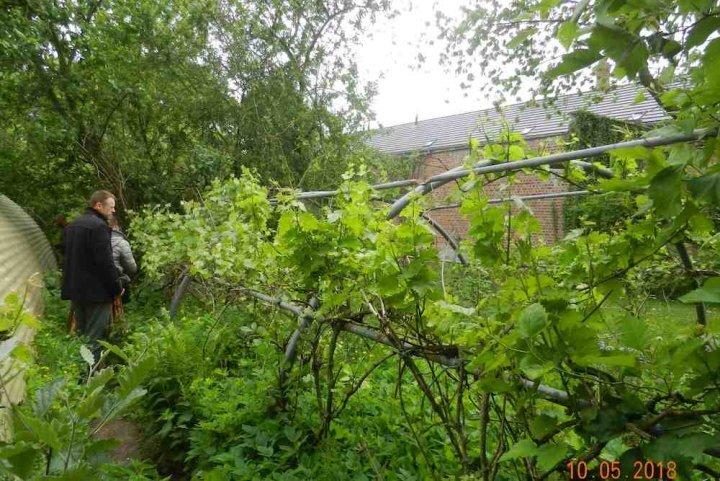 Le jardin des Fraternités ouvrières, un petit paradis de permaculture - et de partage